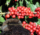 Click for more - Arabica Classic is BACK